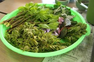 山菜H30山菜.JPG